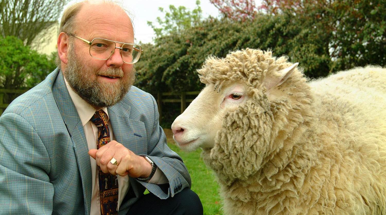 sheep-pic4_zoom-1500x1500-52547.jpg