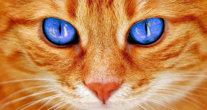 Домик для кошки своими руками: 70 фото-идей | 375x705