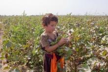 Где и кем трудятся таджикские дети