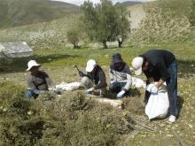 5 целебных трав Таджикистана, которые лечат практически любую болячку
